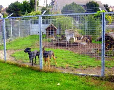 Zaun f r hundeauslauf 2 rollen maschendraht 50 m zaun garten hundeauslauf eur hunde und - Gartenzaun fur hunde ...