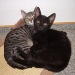 Kiki und Stella