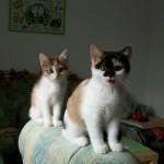 Peachy und Pepina