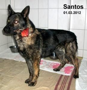 Fundhund Santos