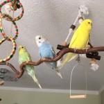 Charlie, Kuko und Krümel