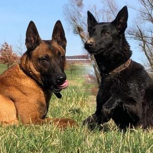 Ares & Malina