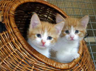 Katzen im Körbchen (1)
